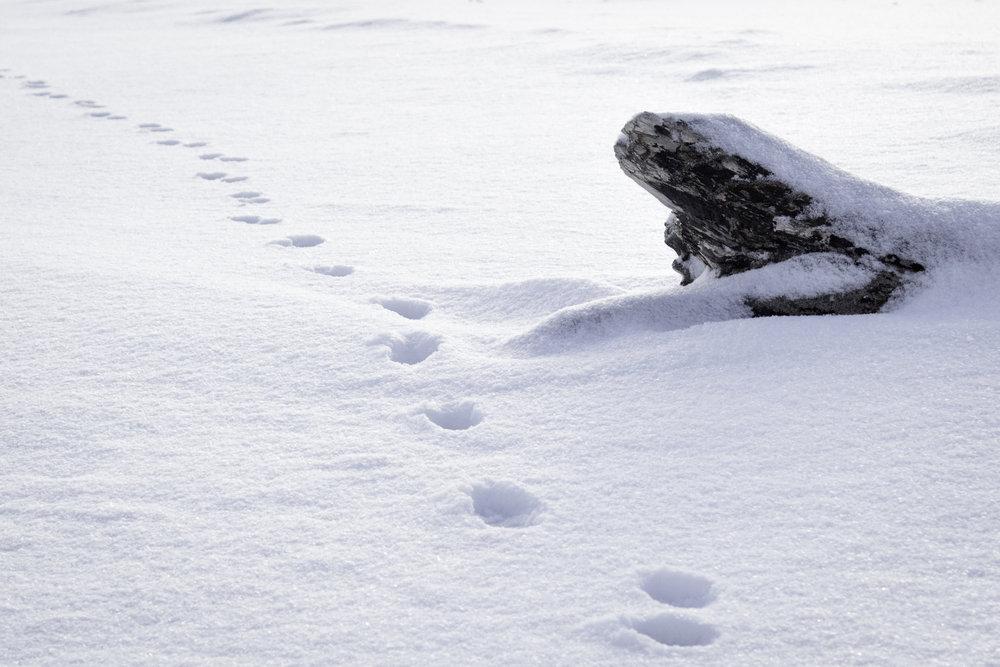 winter35.jpg
