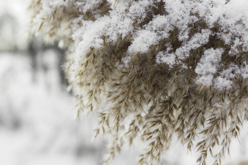 winter36.jpg