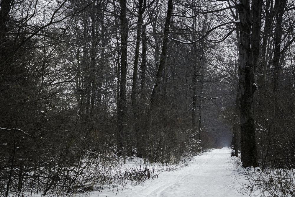 winter37.jpg