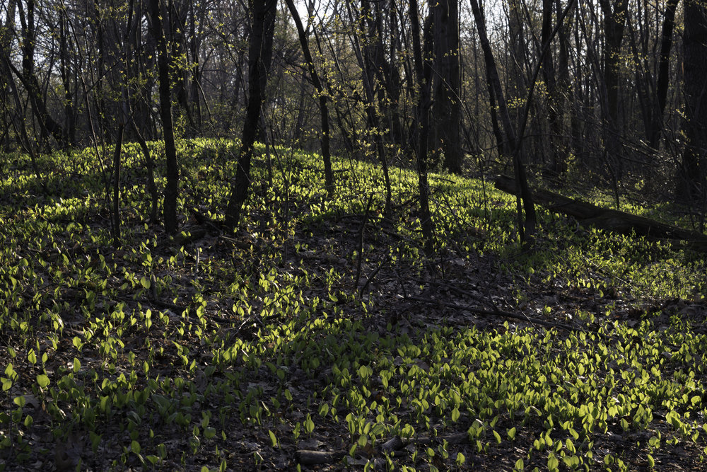 spring11.jpg