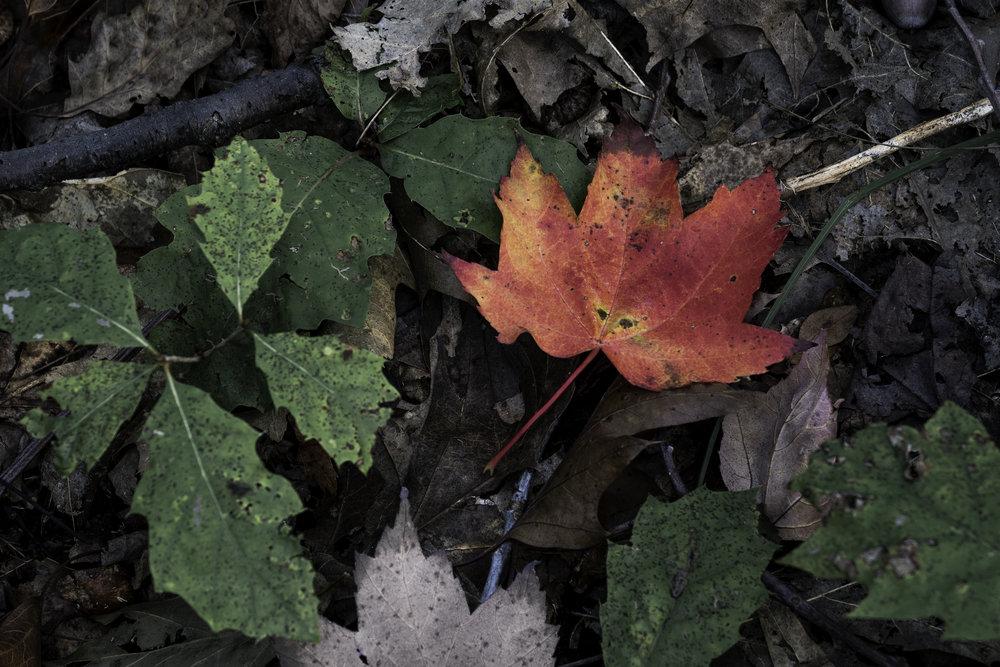 fall04.jpg