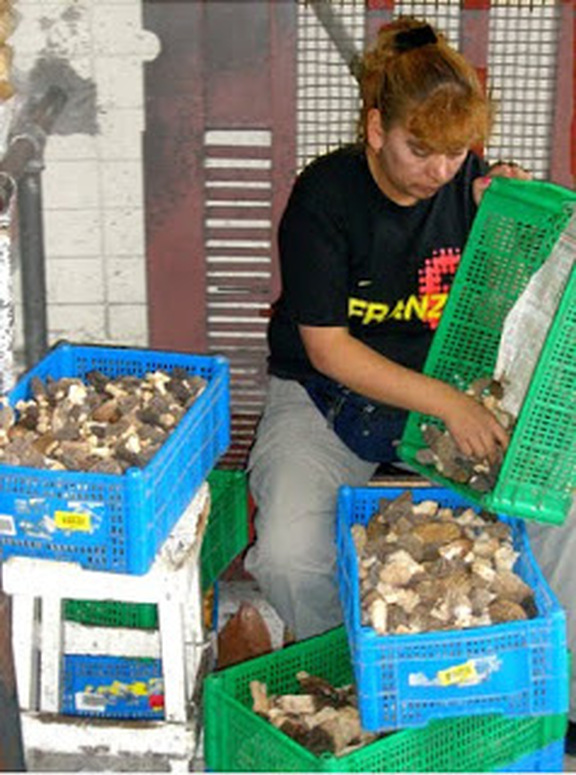 Doña Guadalupe, the famous mushroom lady with a new load of morels