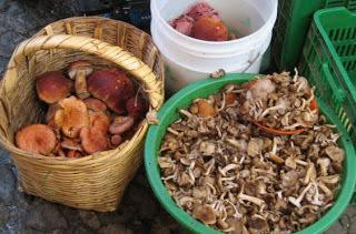 Copy of wildmushrooms-6.jpg