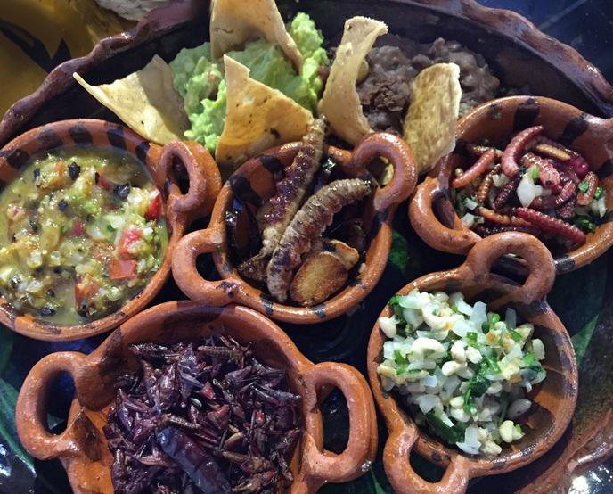 Bug taco platter