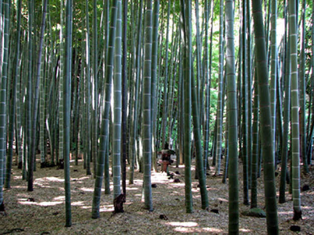 A bamboo forest has more underneath the surface than expected.