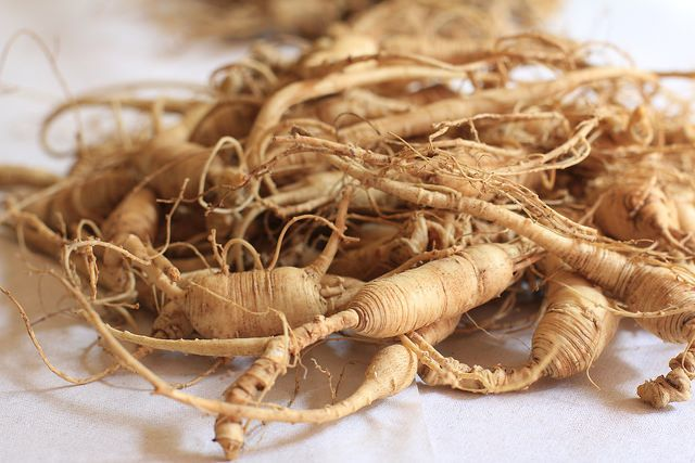 Siberian Gingseng Root. Photo by Forest Farming.