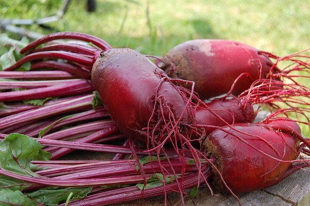 Beet root with foliage