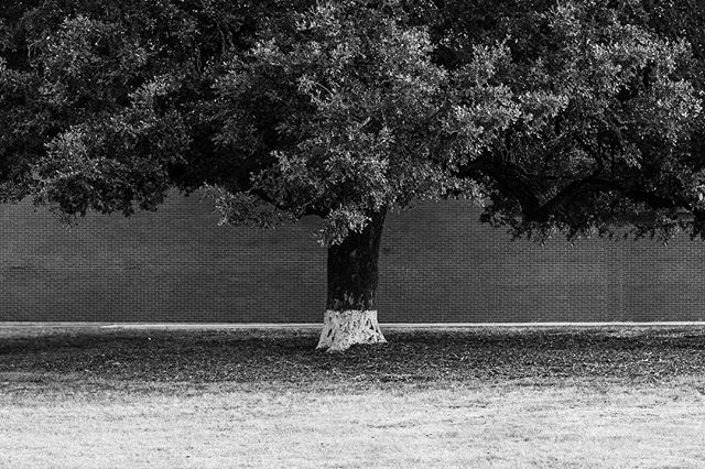 Oak Land