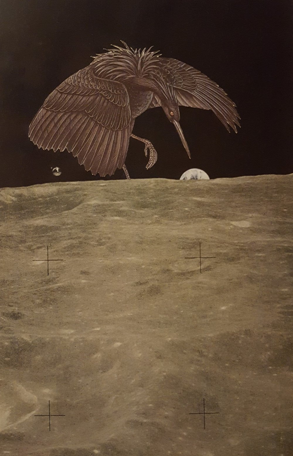 collage-bird-moon-earth.jpg
