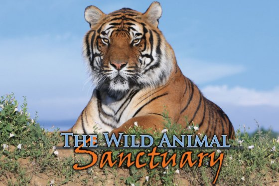 Wild-Aninal-Sanctuary-Header-560x373.jpg
