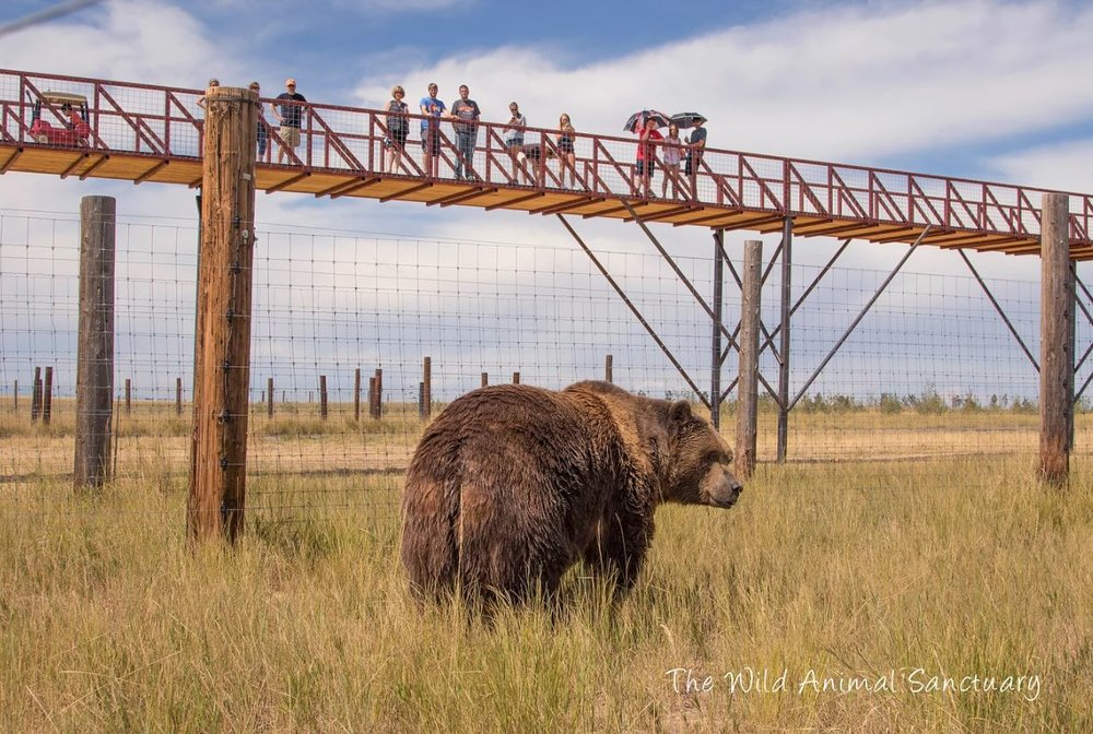 The Wild Animal Sanctuary's 1 1/2- Mile long elevated walkways that allows you to view habitats from above.