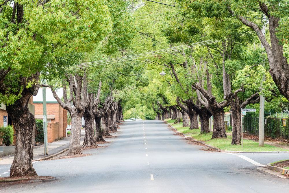 StreetTrees_029_Medium.jpg