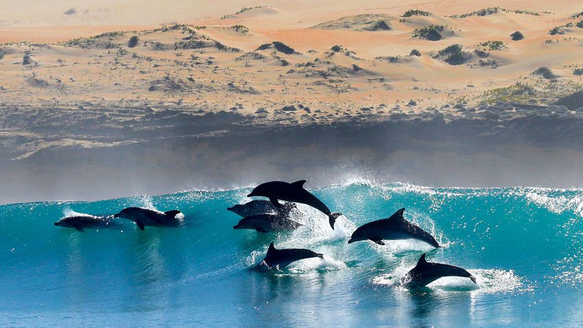Superpods of 600 dolphins are gathering off the coast of South Africa - Short story for Science magazine, with excellent researcher-provided images and video.