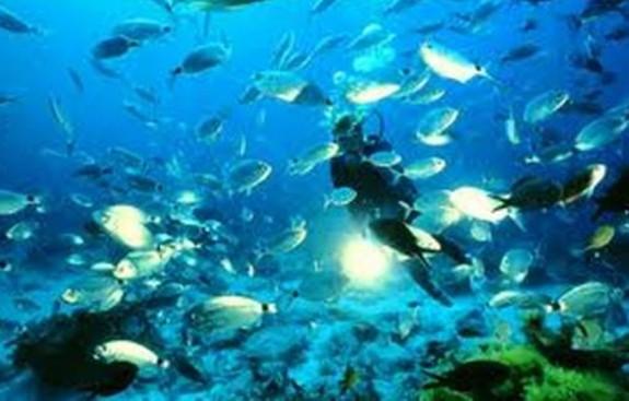 576_Diving.JPG