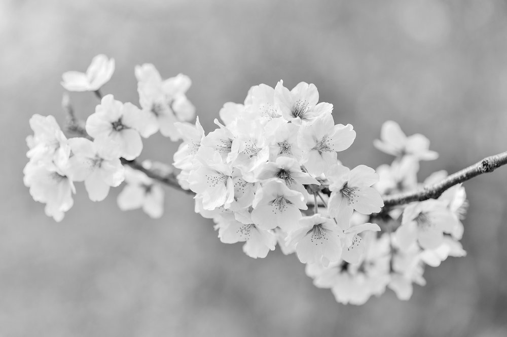 Ikigai - Der japanische Begriff Ikigai existiert bereits seit dem 14. Jahrhundert und bedeutet so viel wie