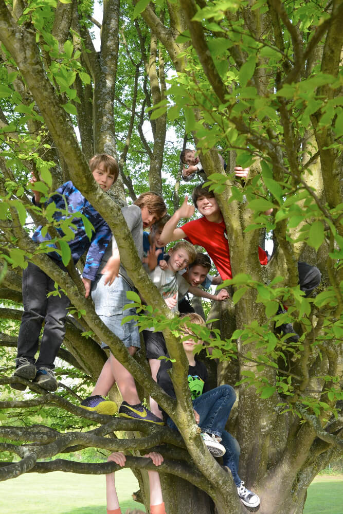 Children climbing trees in the park
