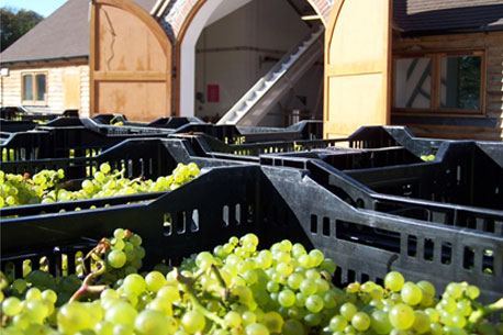 hattingley-valley-winery-and-grapes.jpg