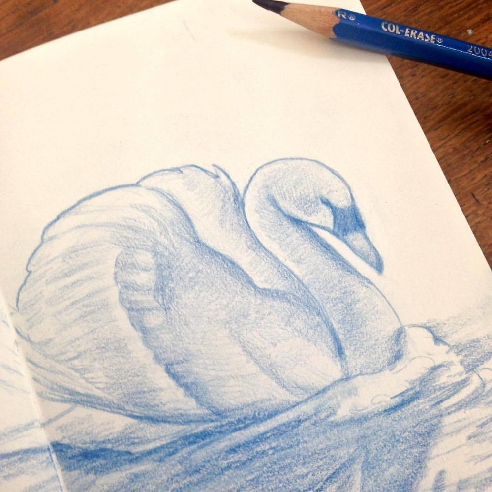 Working on an idea for #monthoflove #secrets #monthofloveart #swanqueen #swan  #illustration #sketch #belindaillustrates
