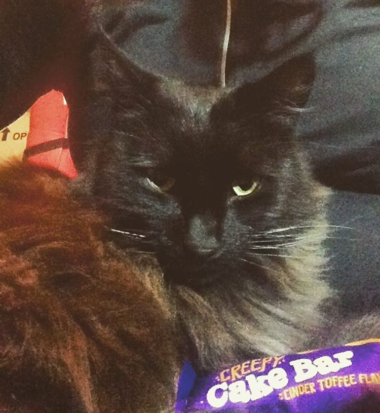So far this Halloween I have had one visitor (well 3 actually but the other 2 came before I had a chance to buy some treats) 👻☺️ this is Shadow our local stray ❤️ #Halloween #blackcat #trickortreat #catsofinstagram