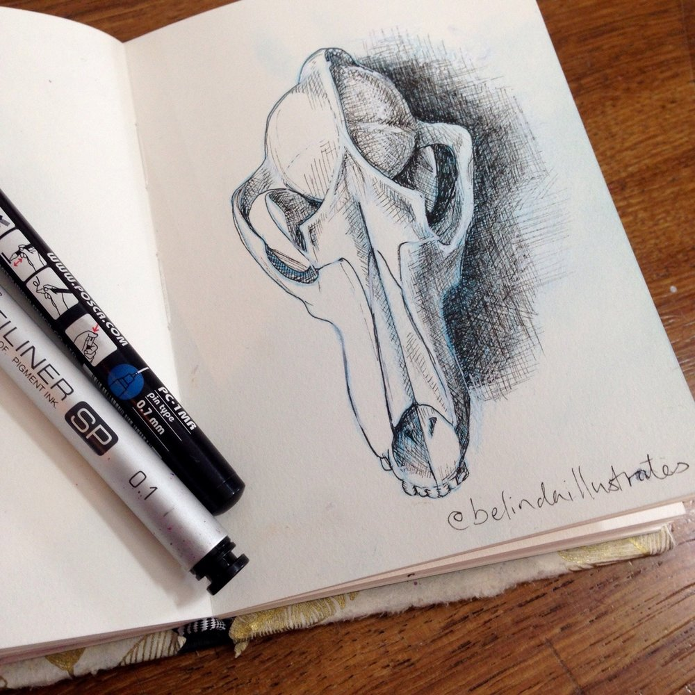 Practising for next months #inktober I'm so rusty! Inking done over the previous post of a drawing of a foxes skull