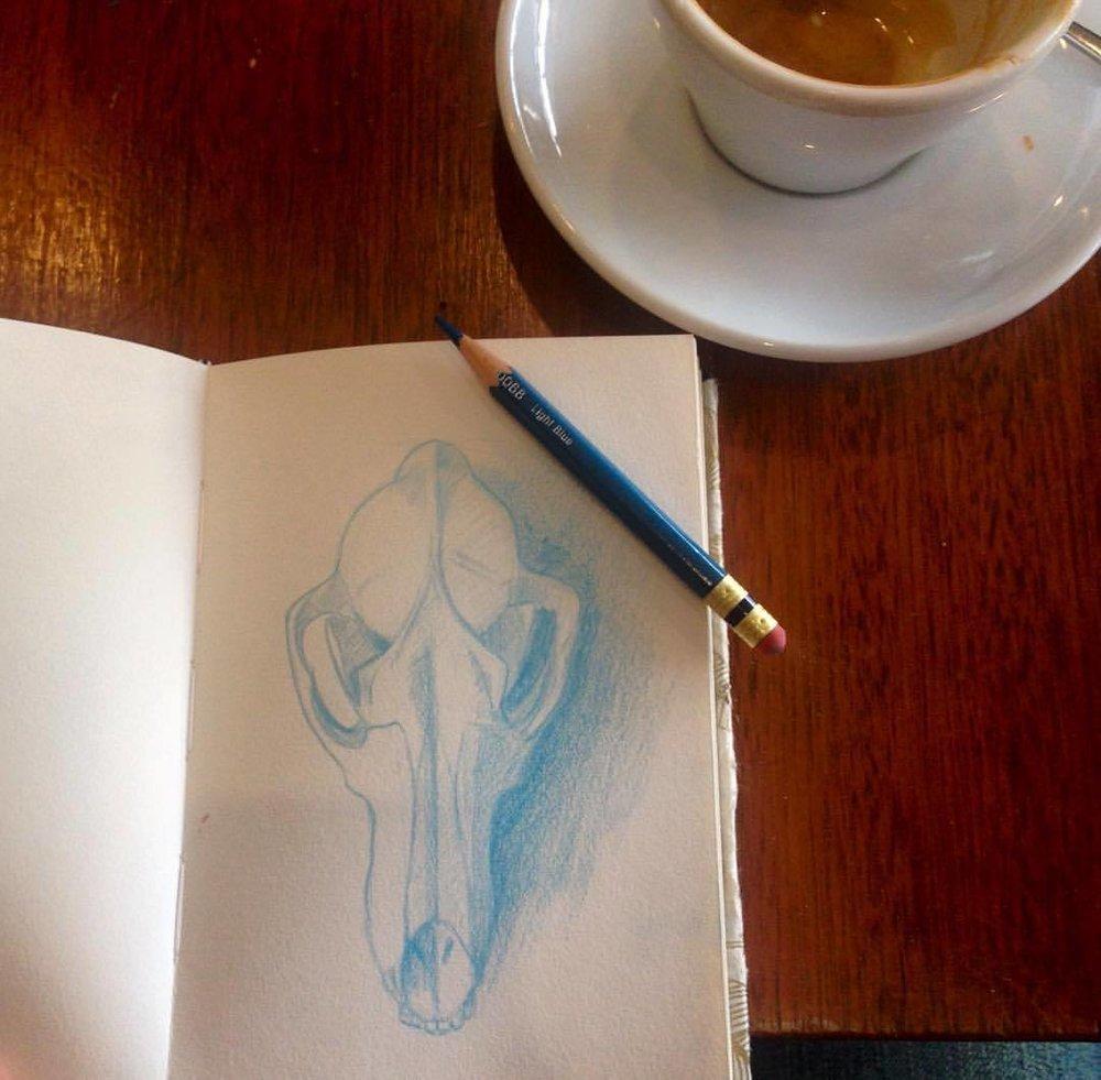 Coffee and fox skulls 😁 #sketchtember #2016 #pencils #melbourne #prismacolor #bluepencil #foxskull #sketch #sketchbook #drawing #instaart #illustratorsofinstagram  (at Melbourne, Australia)