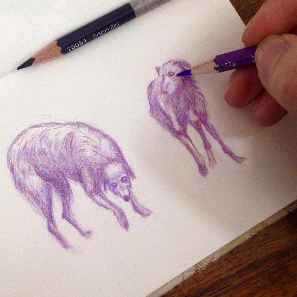 Some hounds on the hunt #belindaillustrates #sketches #drawing #sketchtember #sketchtember2016 #pencil #colerase #prismacolor #sketchbook #deerhound #dog #purple #lavenderdog #hound #2016 #september