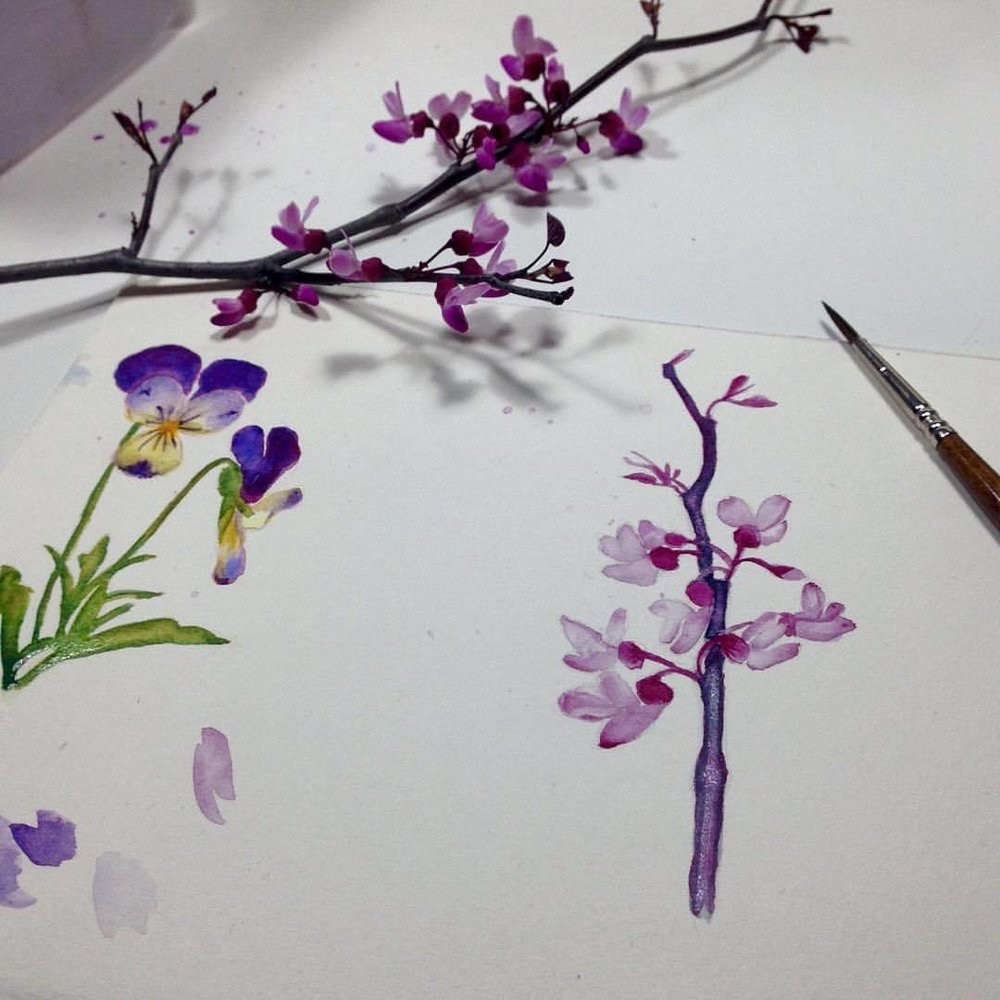 Doing some Spring flower sketches in watercolor all in Daniel Smith watercolors. Their tester dot sheets are a great way to try out their paints. I'm currently loving Imperial Purple, Serpentine Genuine and Quinacridone Violet 💜 #september #2016 #danielsmithwatercolors #danielsmith #flowerpainting #sketches #spring2016 #australianspring #belindaillustrates #iwantallthethings