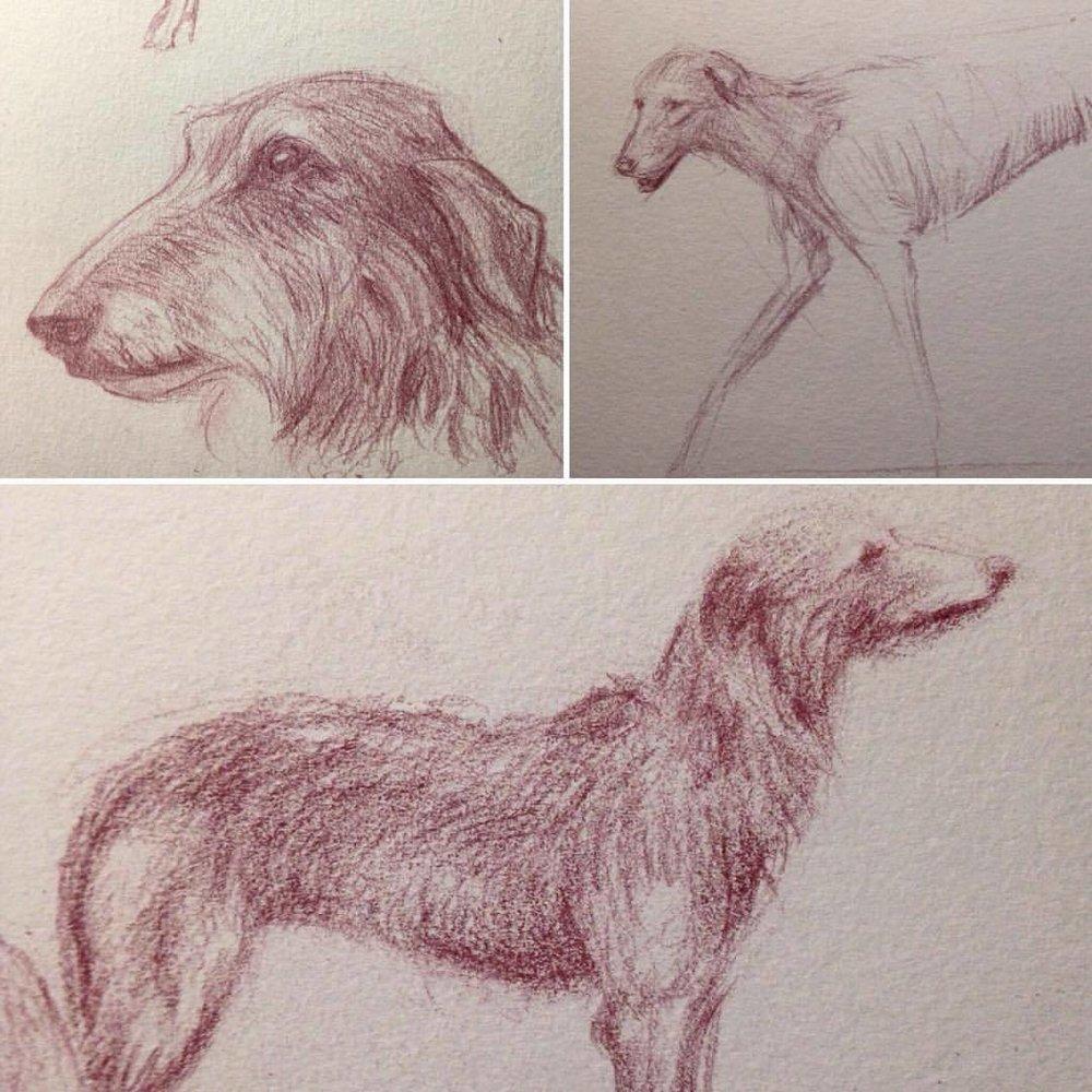 Some Deerhound sketches for #sketchtember #2016 #deerhund #deerhound #september #sketch #sketchbook #drawing #illustratorsoninstagram #prismacolor #pencil #pencils #dog #dogsketch #belindaillustrates