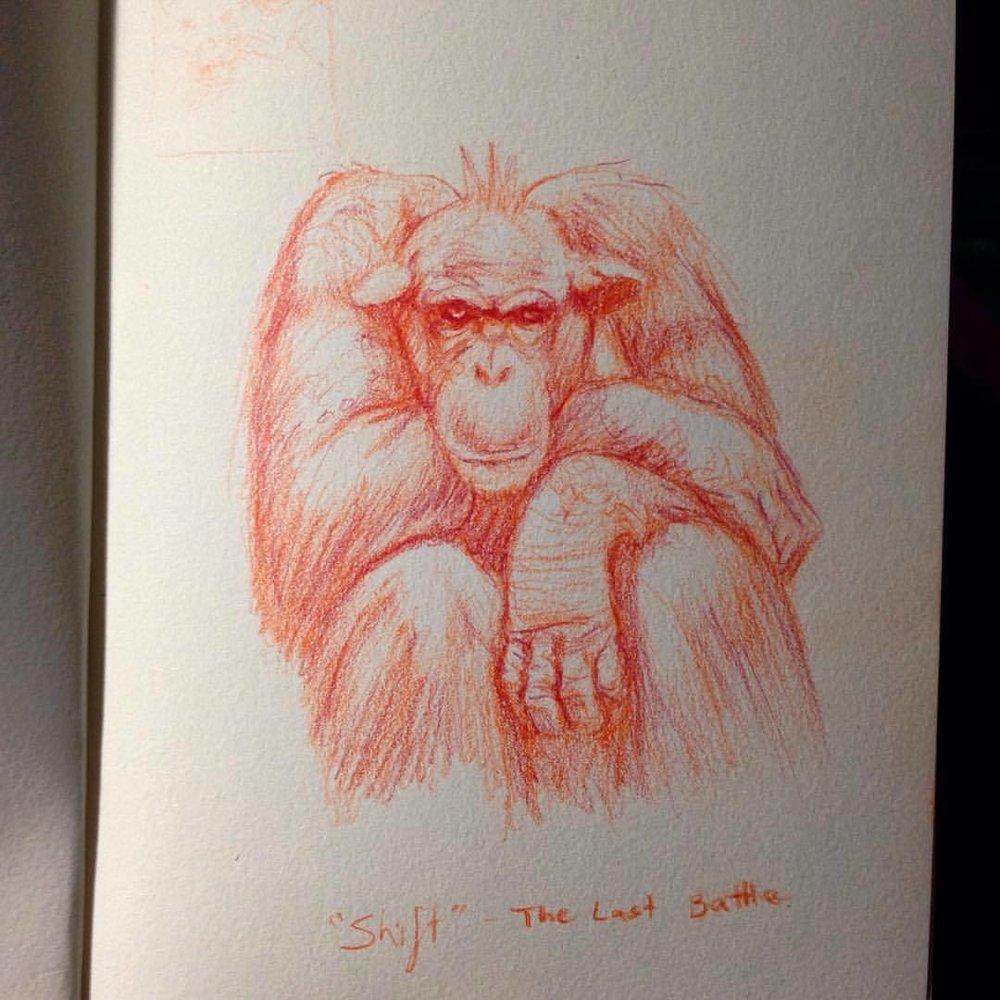 Cranky chimp study #belindaillustrates #colerasepencils #sketch #chimpanzee #crankyape #crankymonkey #cranky #orangepencil #study
