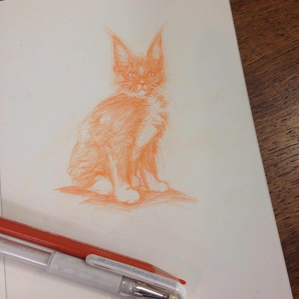 Another orange kitty ☺️ #sketch #orange #kitty #kittycat #col-erase #prismacolor #pencil #belindaillustrates