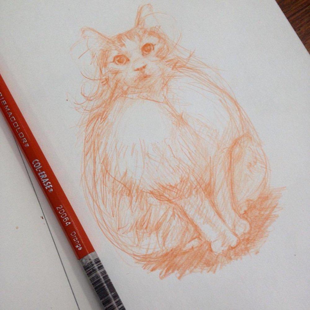 A pretty pussy ☺️ #belindaillustrates #2015 #puss #cat #orange #col-erase #prismacolor #pencil #sketch