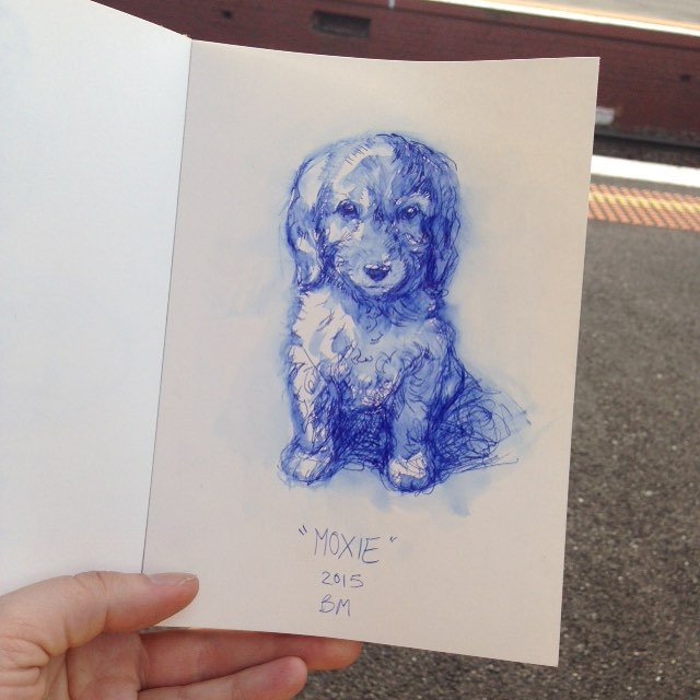 My sisters new puppy spoodle Moxie ☺️ #Inktober #ink #puppy #spoodle #2015 #belindaillustrates #lamy #pen #blue #cutepuppy
