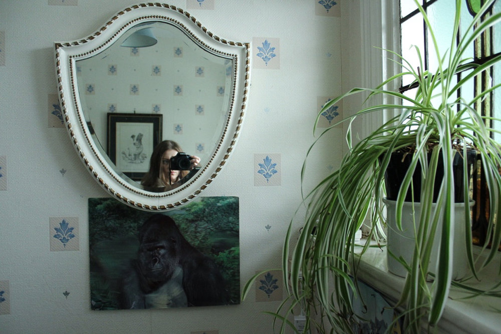 Gorilla and Mirror On The Wall.jpg