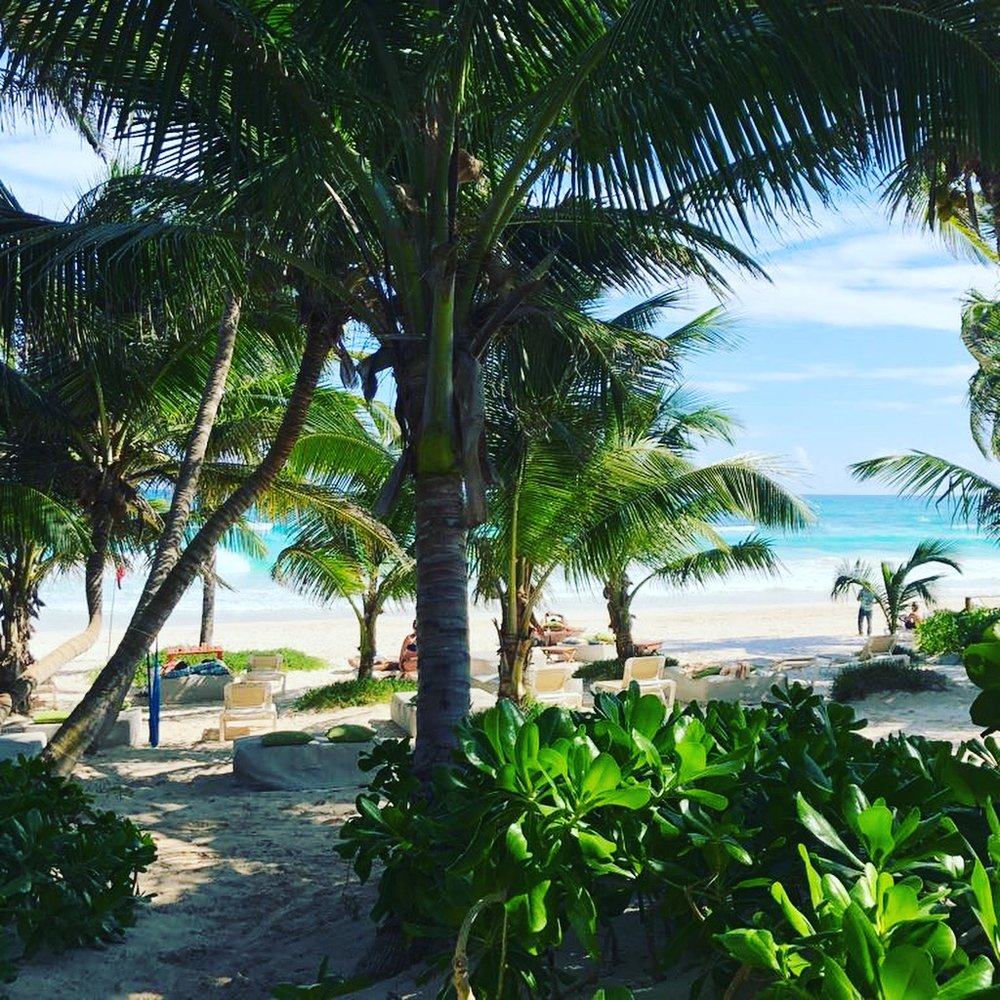 tulum beach with trees.JPG