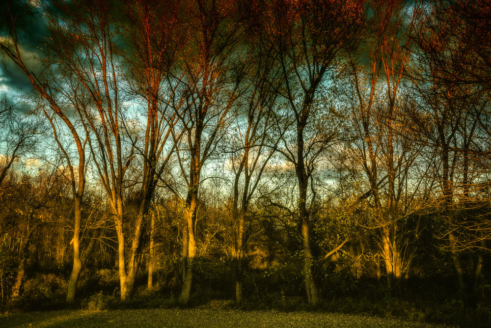 Light in the Trees-2.jpg