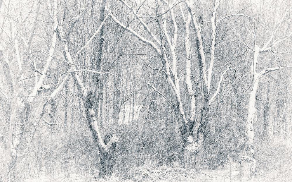 Snow in the Trees.jpg