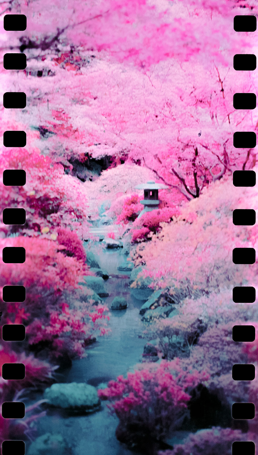 Color Infrared 35mm format film photography