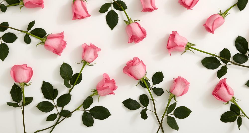 2-1_History-Pink-Roses_MainHero.png