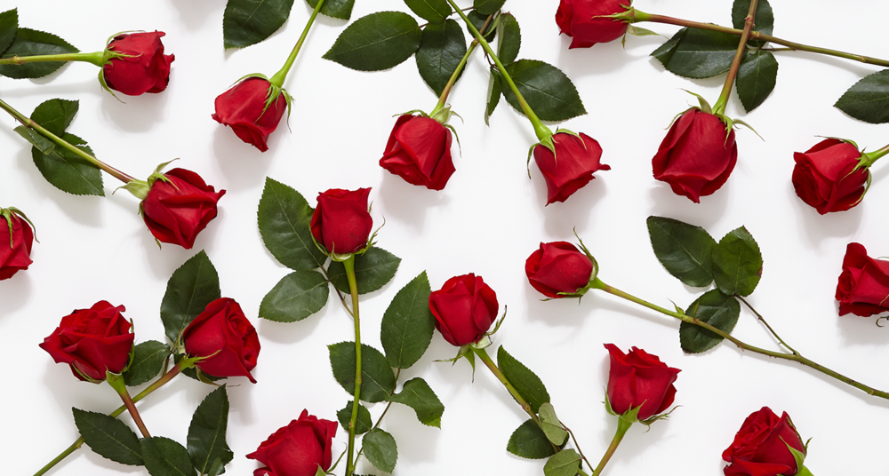 7-31_History-Meaning-of-Red-Roses_MainHero.png