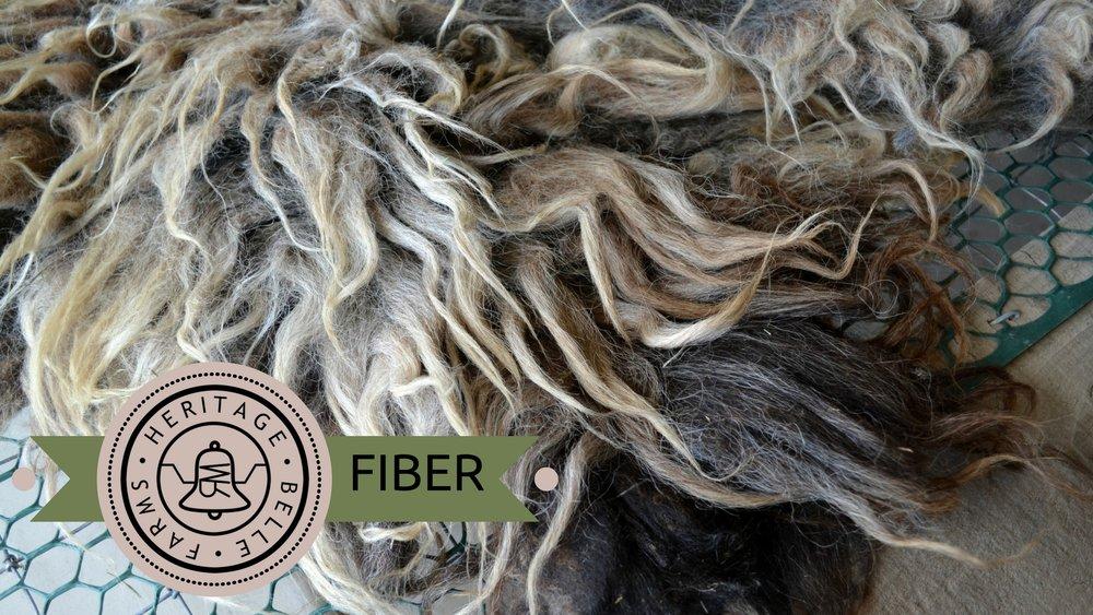 HBF Web fiber.jpg