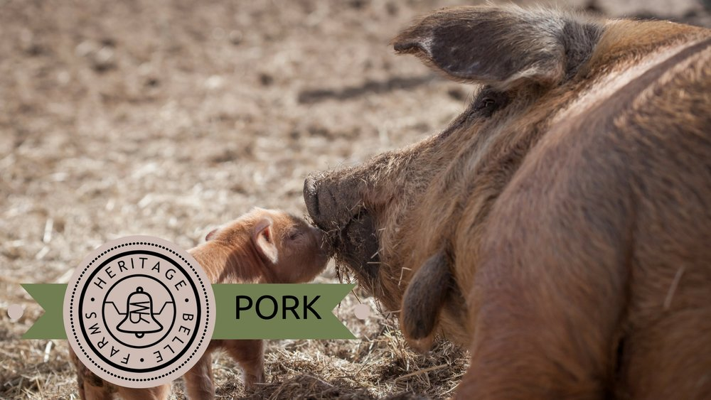 HBF Web pork.jpg