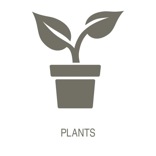 Plants_T.jpg