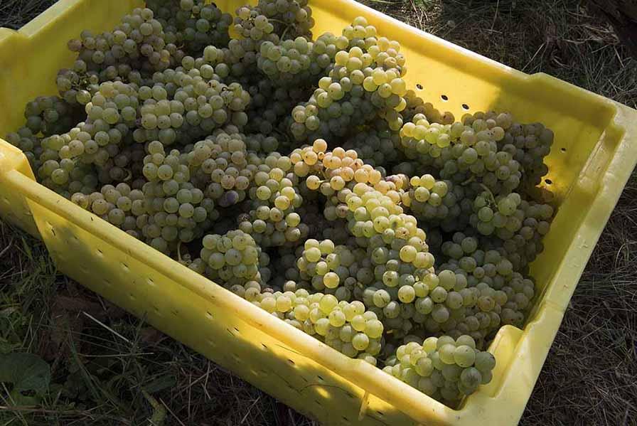 Harvest_white_1531-k.jpg
