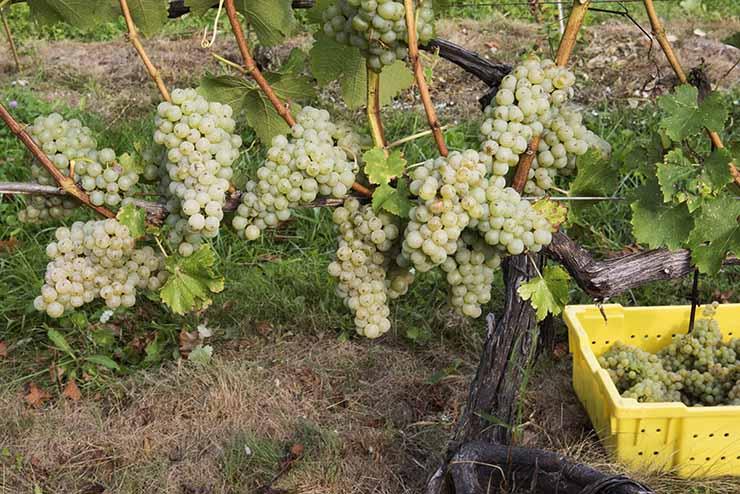 Harvest_1581_k.jpg