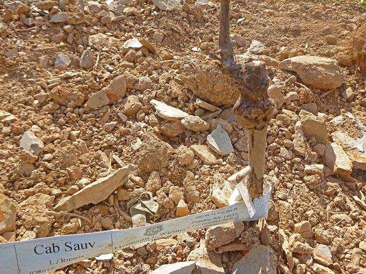 Cabernet loves rocky soils.