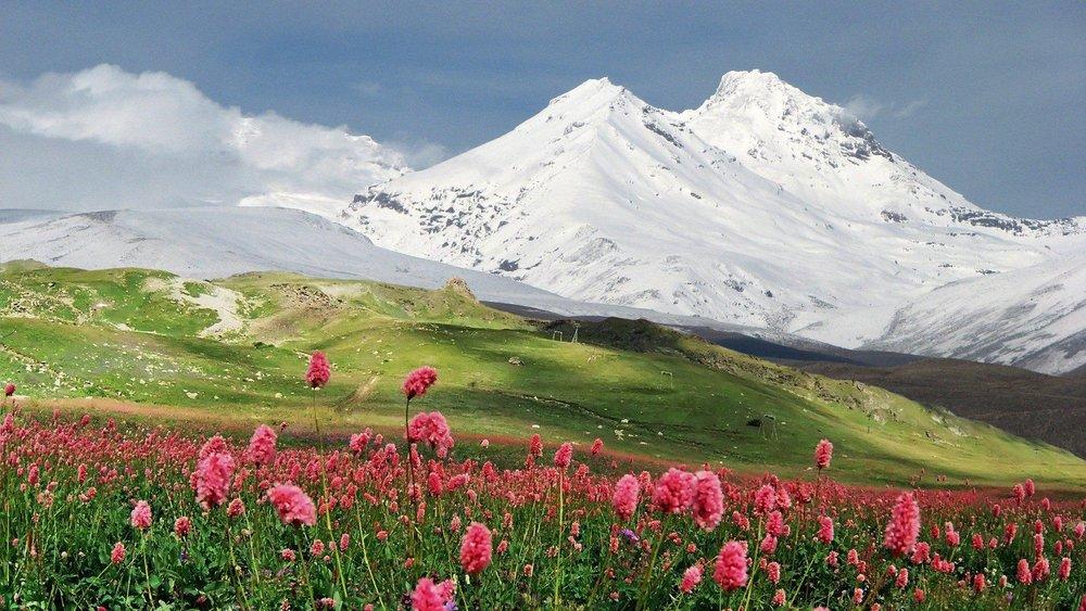 mountain-flowers-field-landscape-1920x1080.jpg