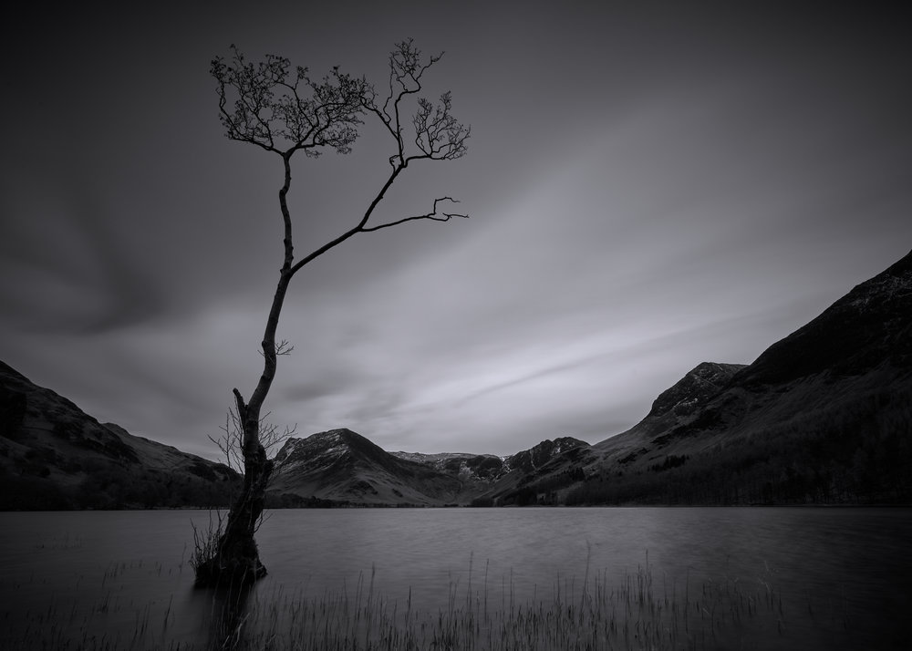 """That Tree"", Buttermere, Lake District"