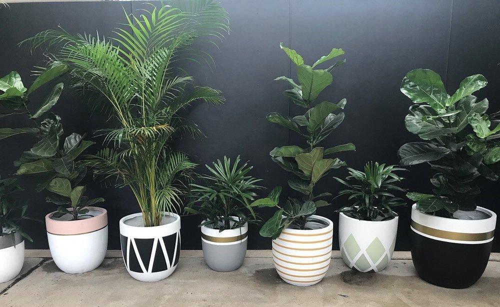 pots new1.jpg
