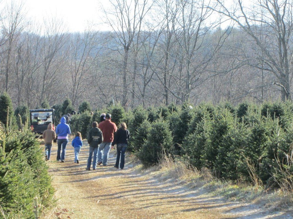 River Hill Tree Farm Photo.jpg