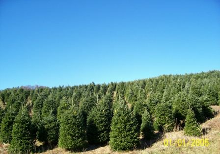 Robert's Tree Farm Photo.jpg